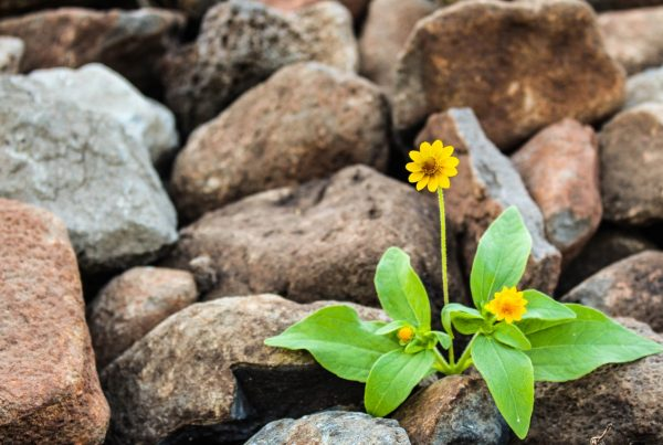 Power of Prevention: The Ethics of Self-Care and Resiliency